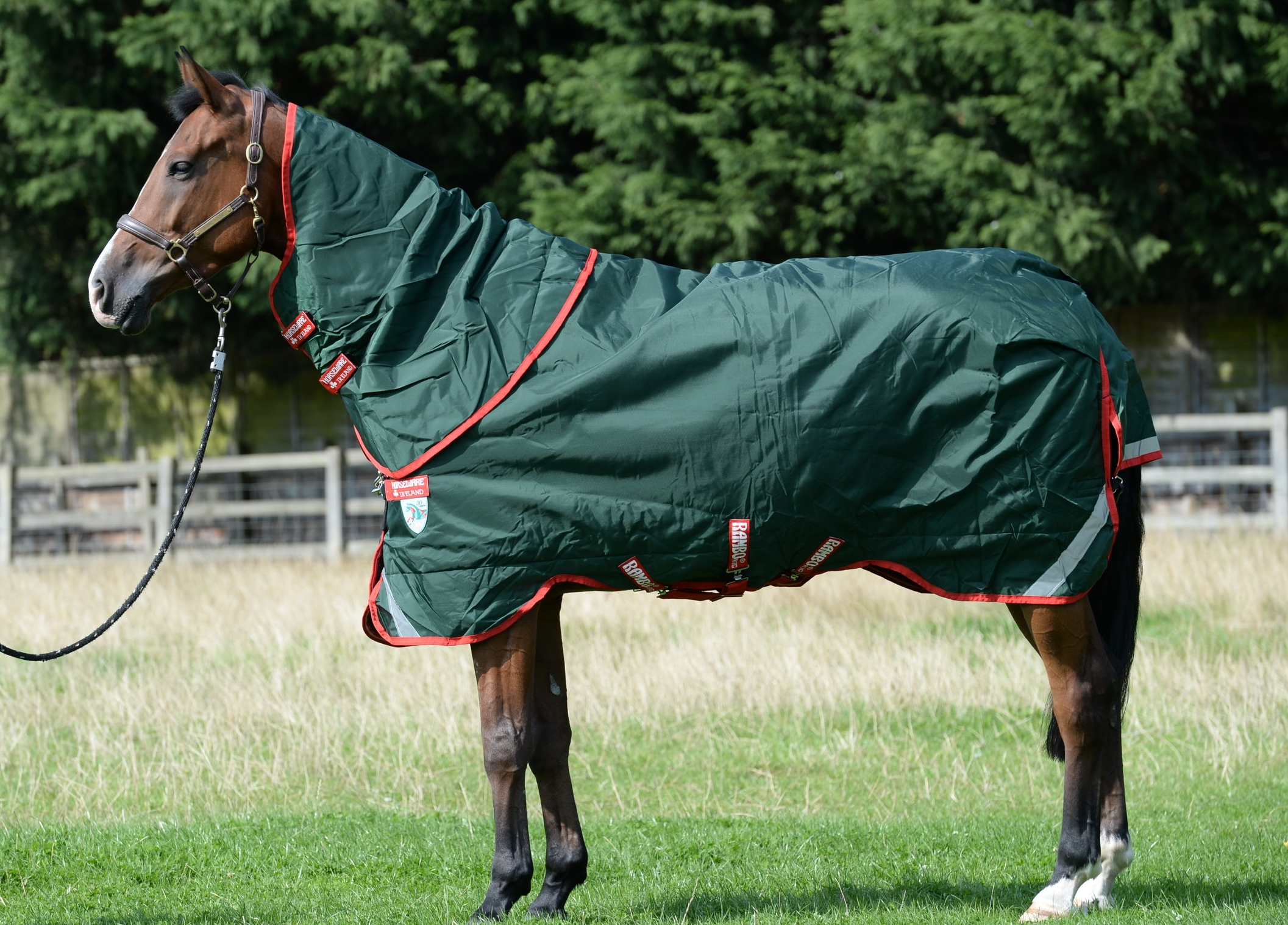 how-to-fit-horse-rug