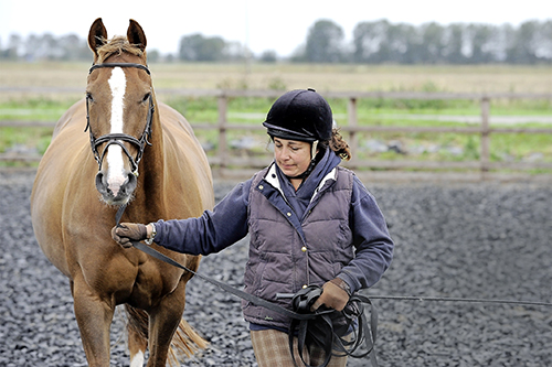 Ground work exercises could help to give your horse confidence