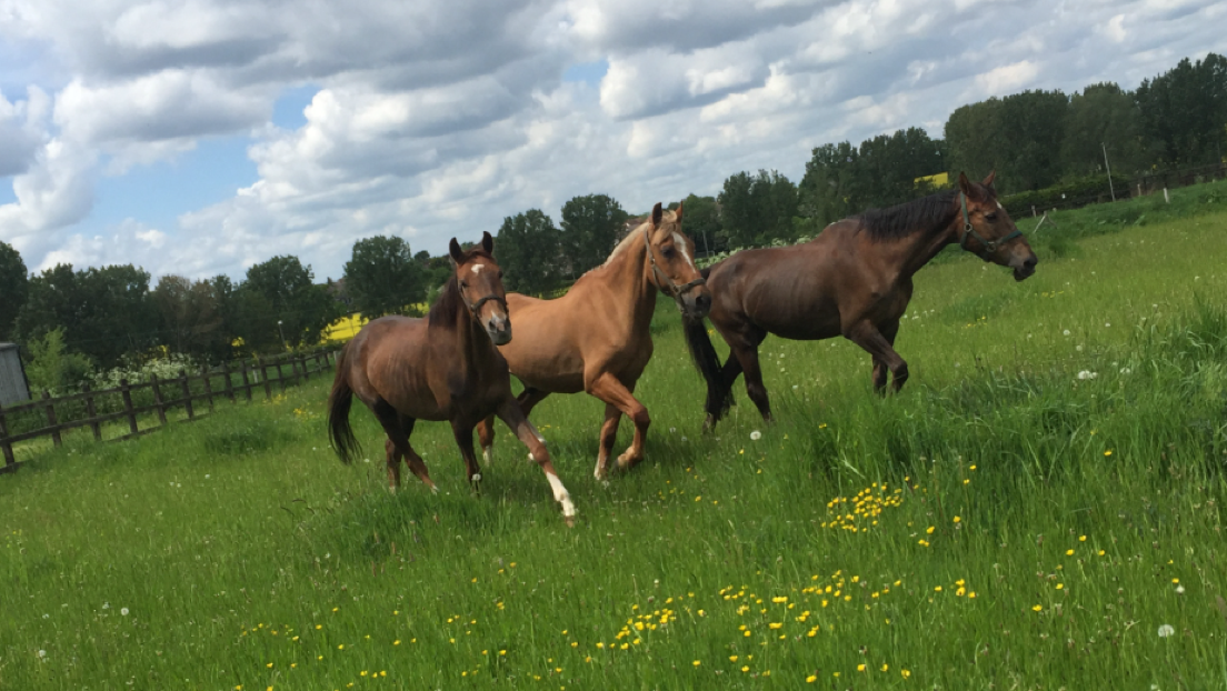 The horses are now doing well and the RSPCA hopes to re-home them (Pic: RSPCA)