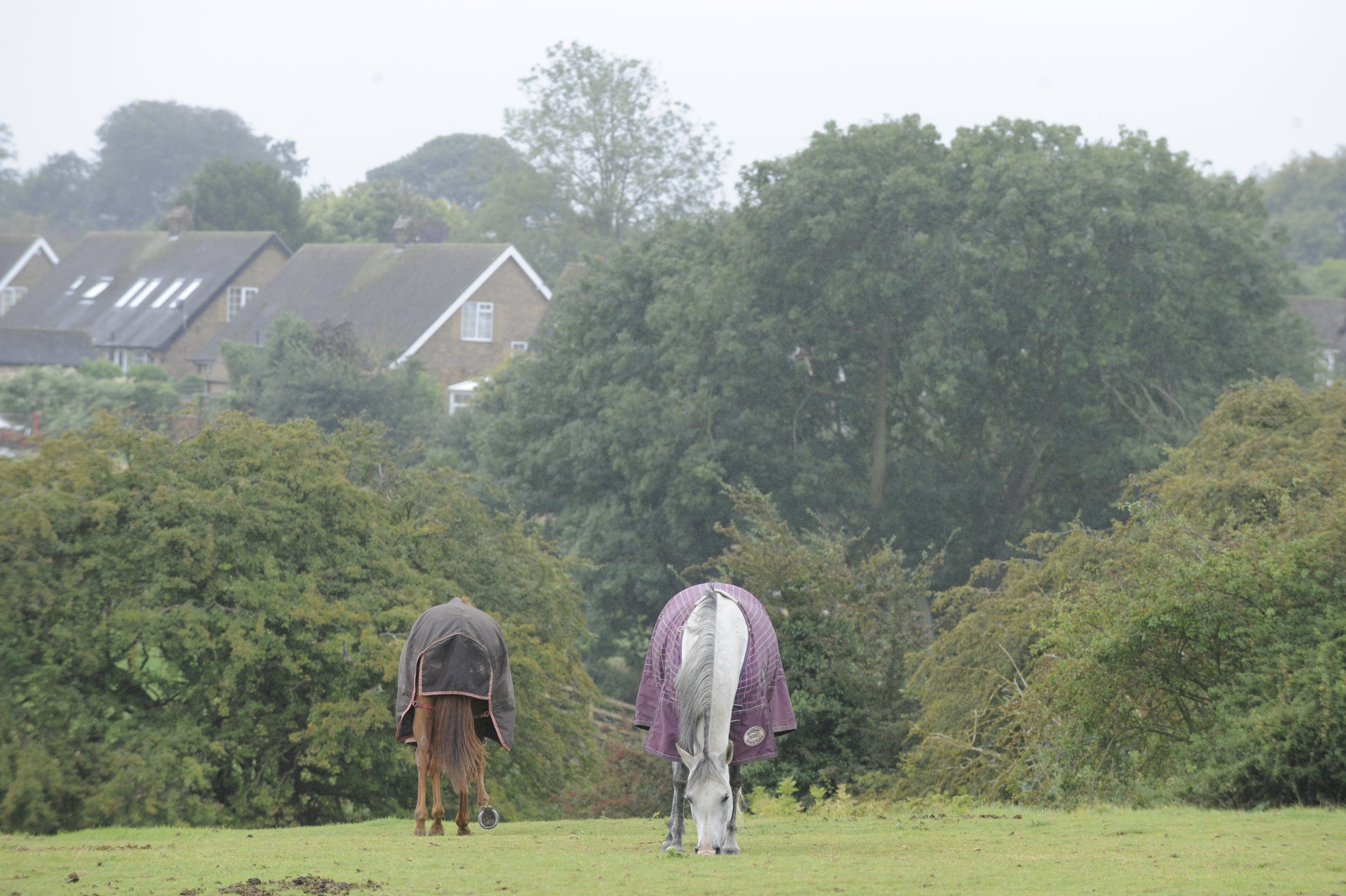 Turning your horse out will prevent stiffness