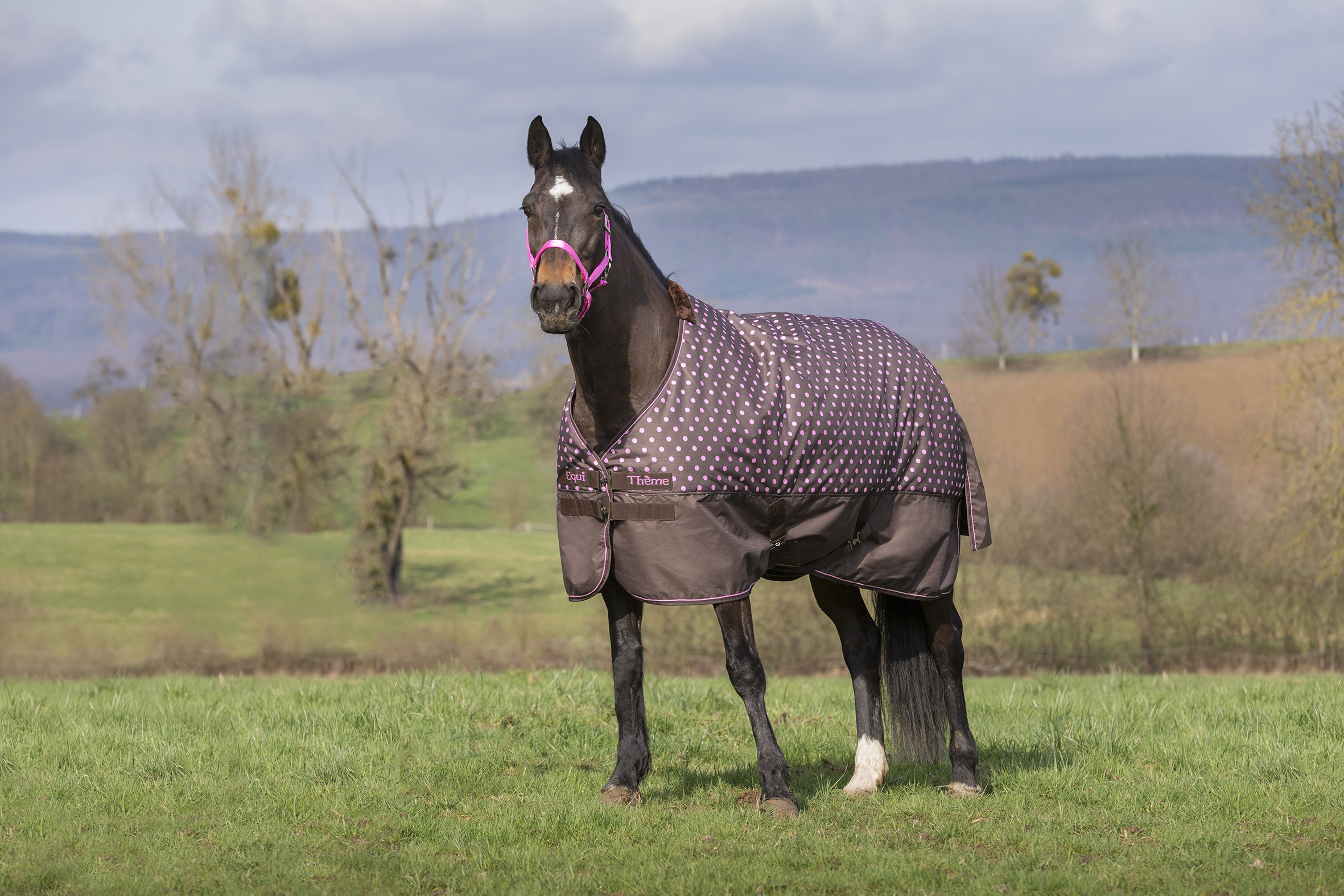The amount of turnout time and your horse's shape will all influence which rug will suit your horse best