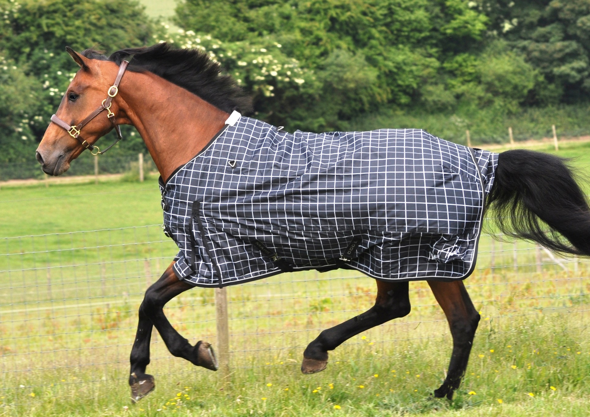 Choosing The Right Weight Winter Horse Rug Your Magazine