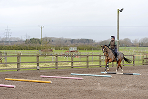 horse cantering over poles