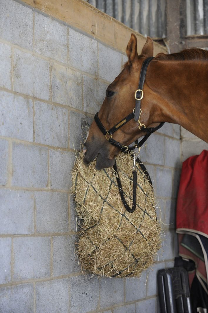 Forage, including grass and hay, help to create your horse's central heating