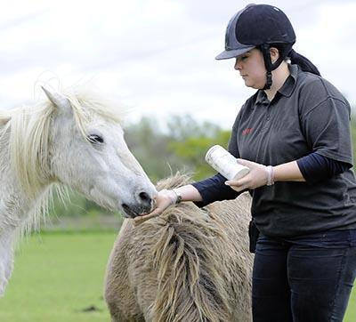 Feeding a horse a treat