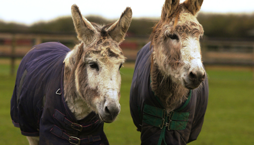 Pandora (left) had lived with Redwings since 1988 (Pic: Redwings)
