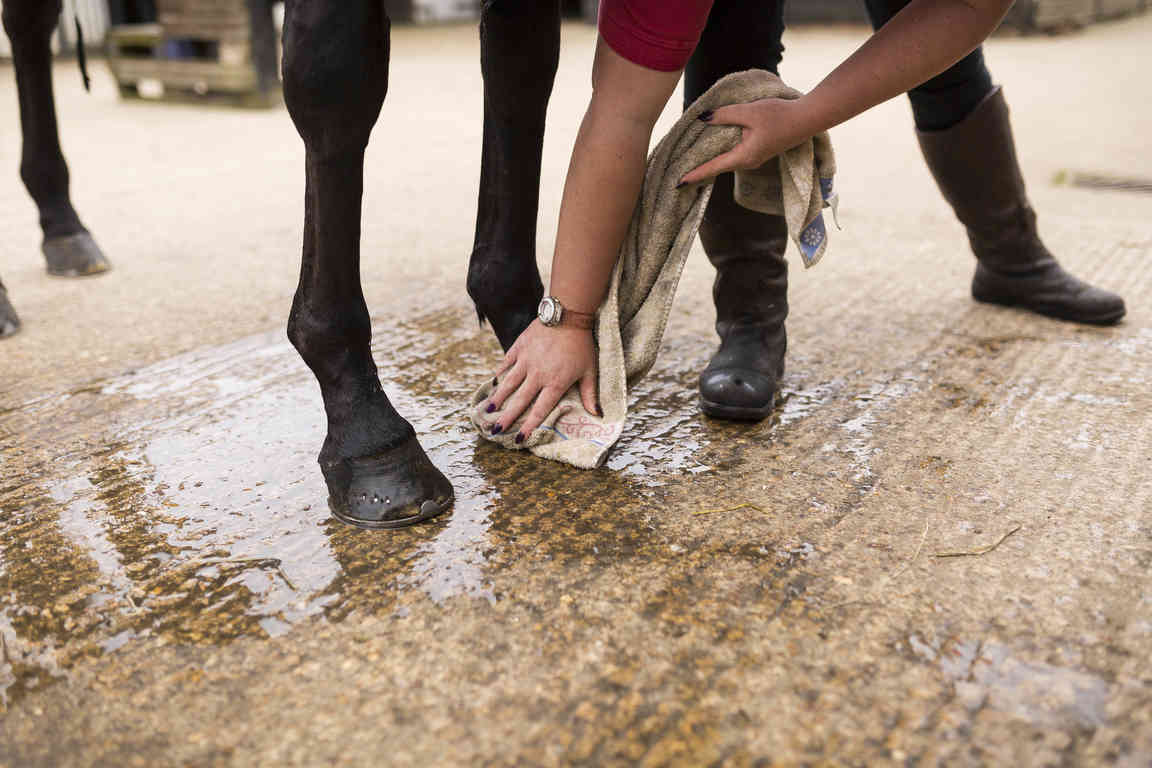 Drying the whole hoof is essential to prevent bacteria taking hold