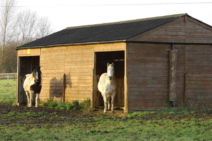 A field shelter can help to keep your horse dry and out of the rain