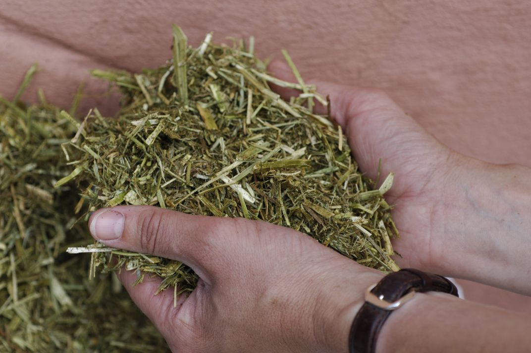 Chopped fibres can be suitable hay replacers