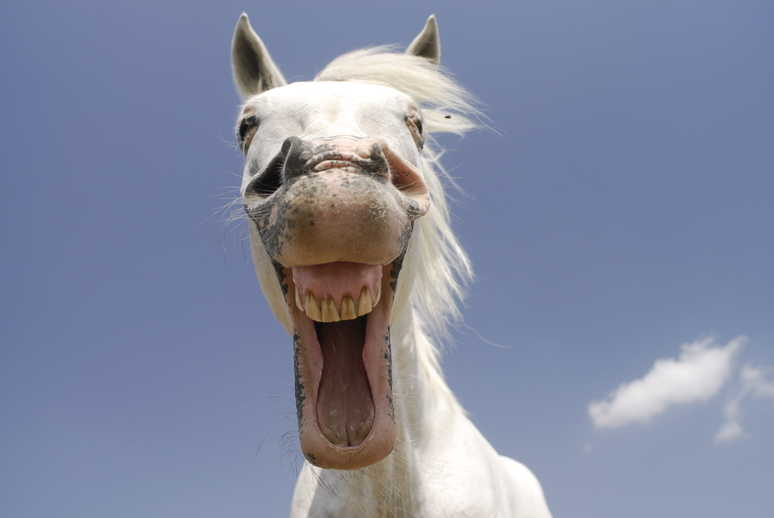 13 signs your horse is happy Your Horse Magazine