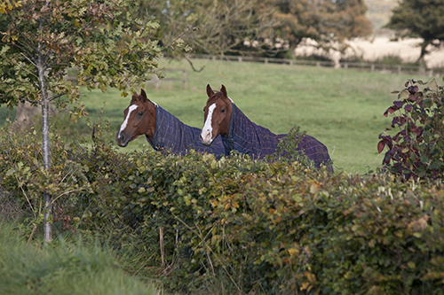 Does your horse's change in behaviour coincide with a change in his management or e.g access to lush spring grass?
