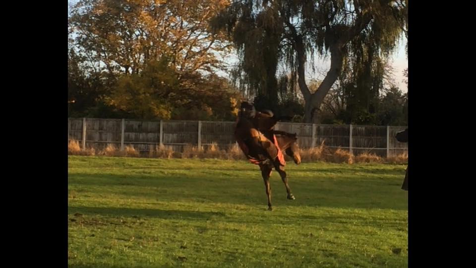 Tobi being a hooligan in his field