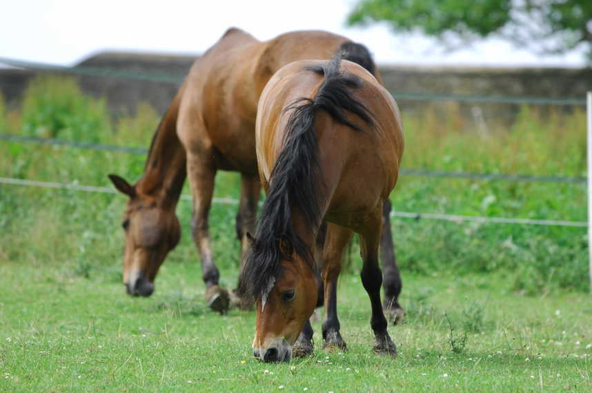 Your horse might benefit being turned out without a rug