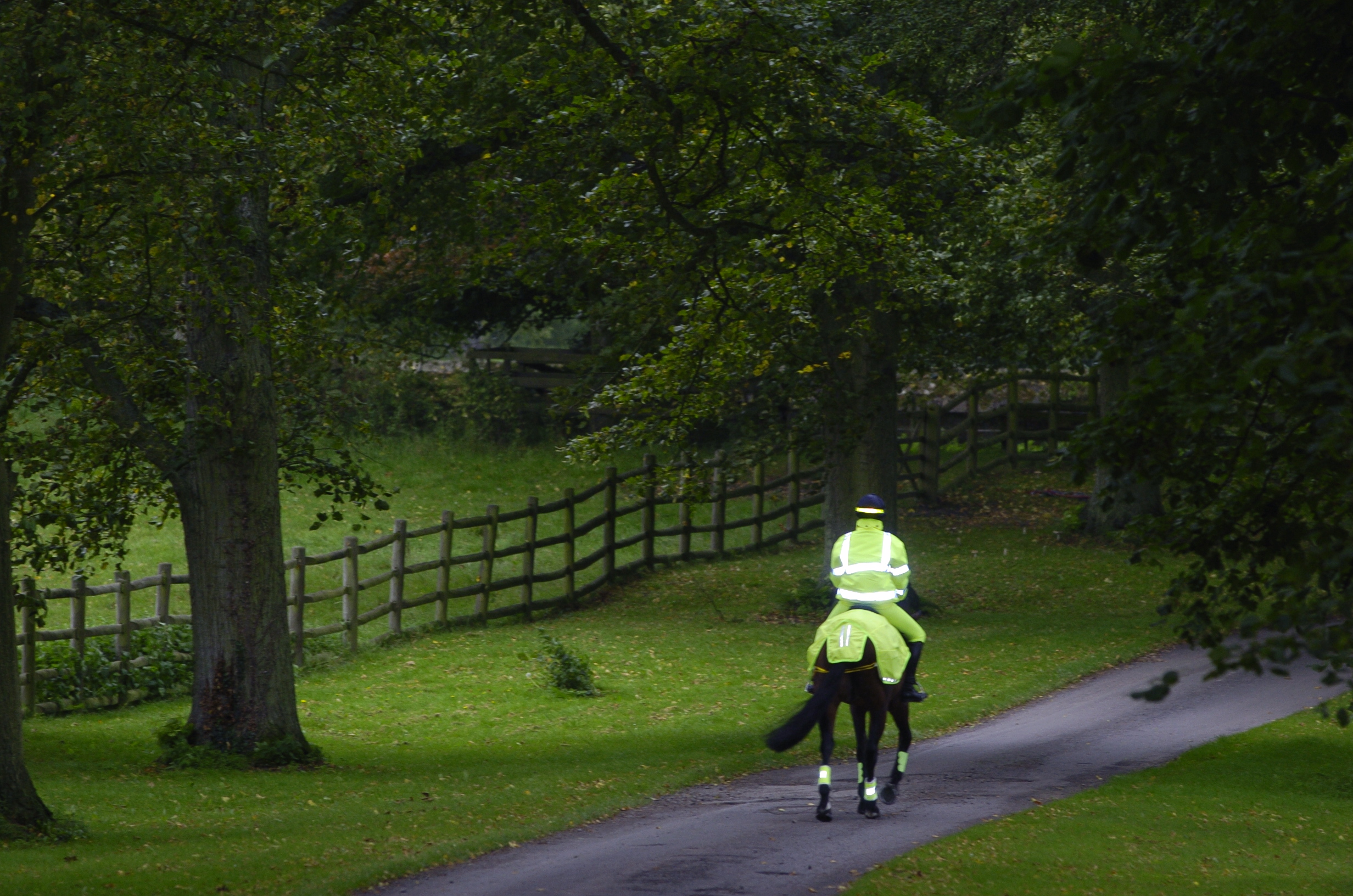 horse cantering up hill