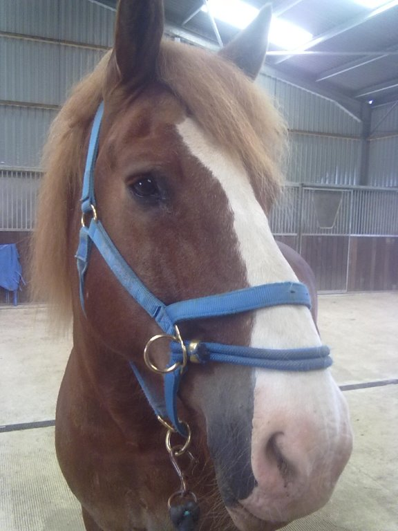 The campaign is helping to save horses, like Axon