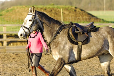 Bringing on a young horse can be very rewarding