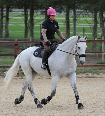 Introduce your horse to a bitless bridle in an enclosed space
