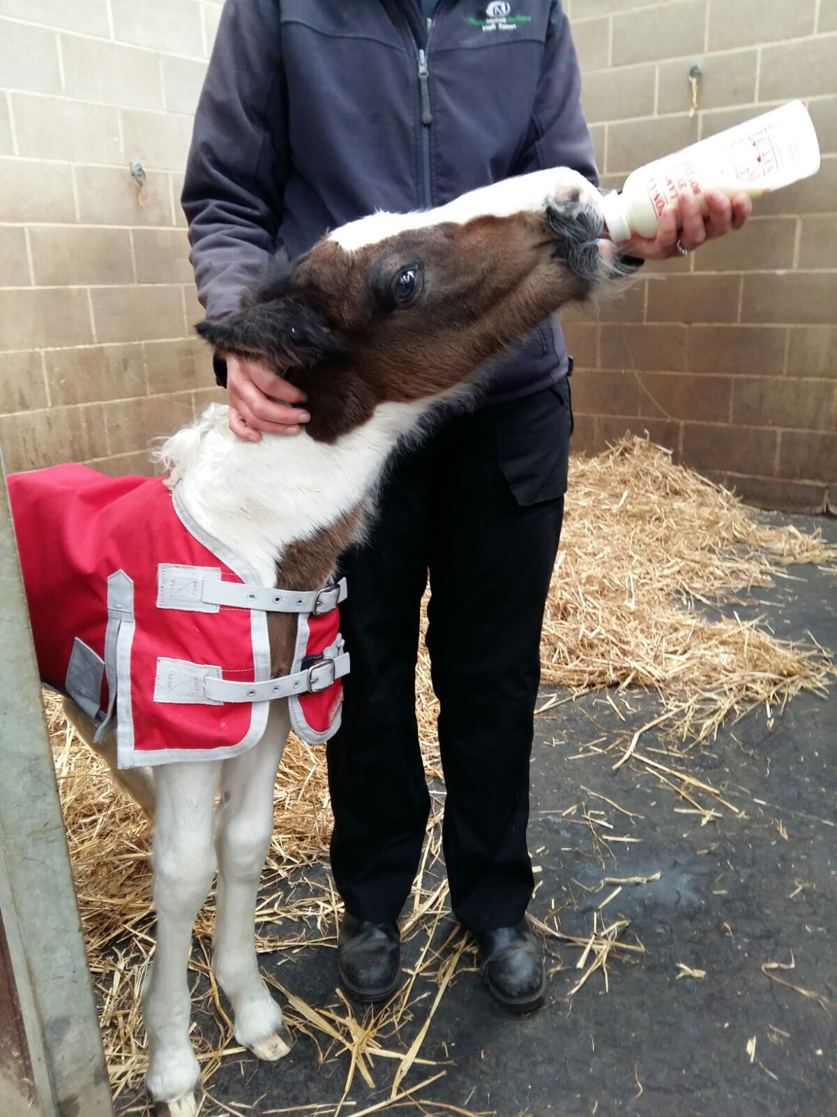 The foal is now in the care of World Horse Welfare