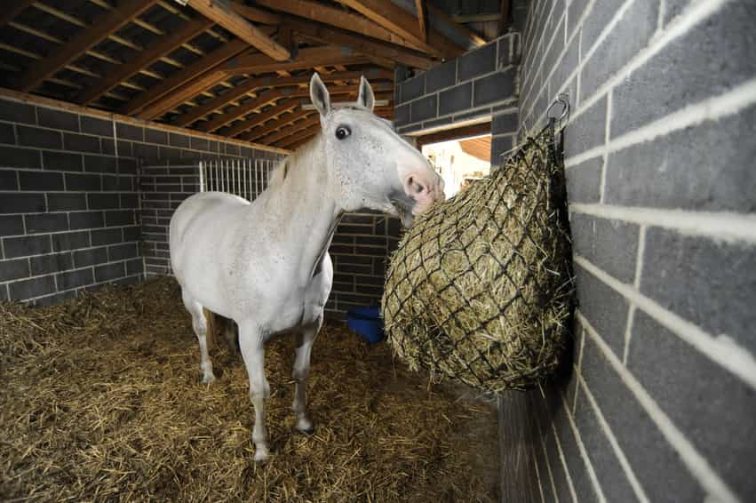 Feeding your horse a high-fibre diet can help reduce his box walking