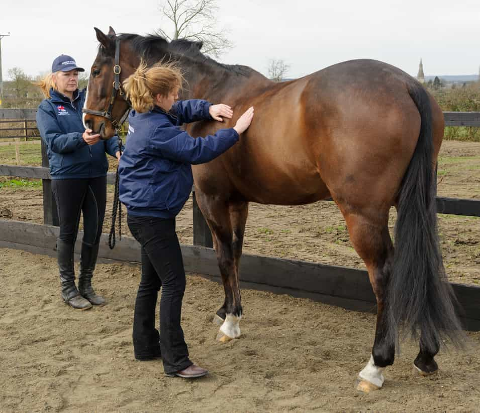 Body condition scoring is an easy way to keep an eye on your horse's weight