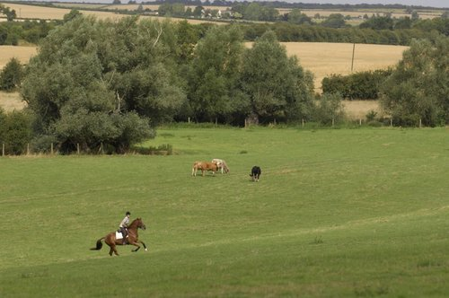 Use hills to your advantage when building your horse's fitness