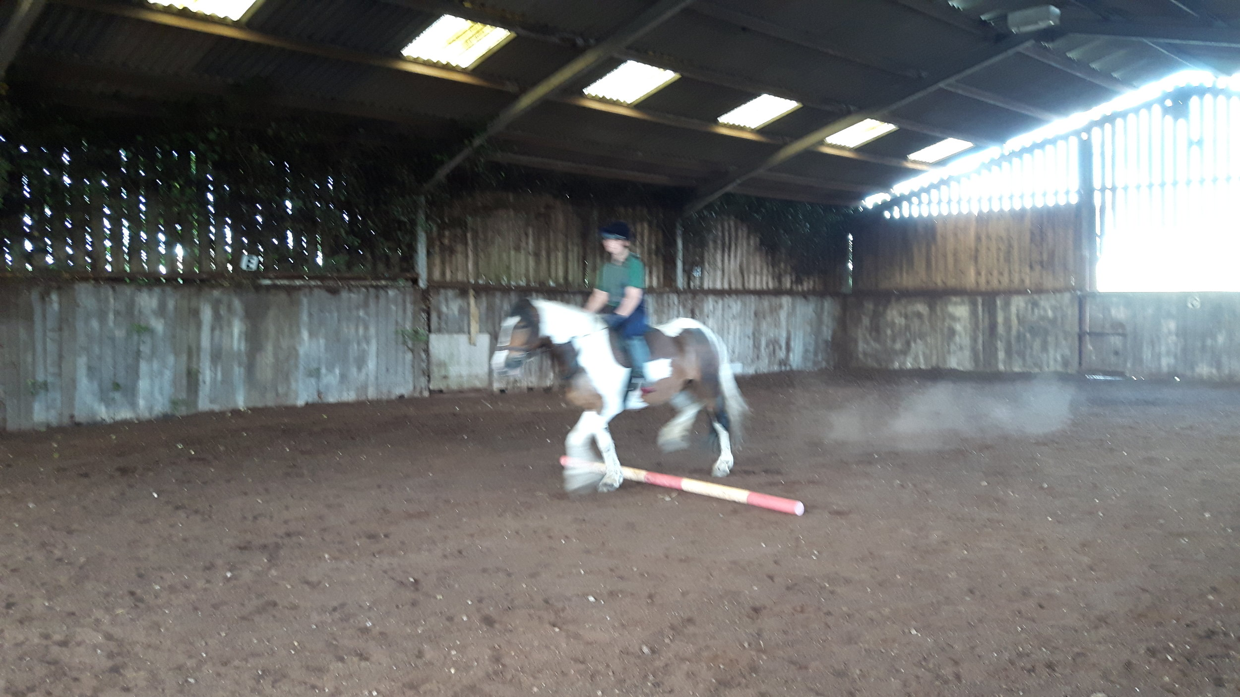 Conquering the trotting pole!