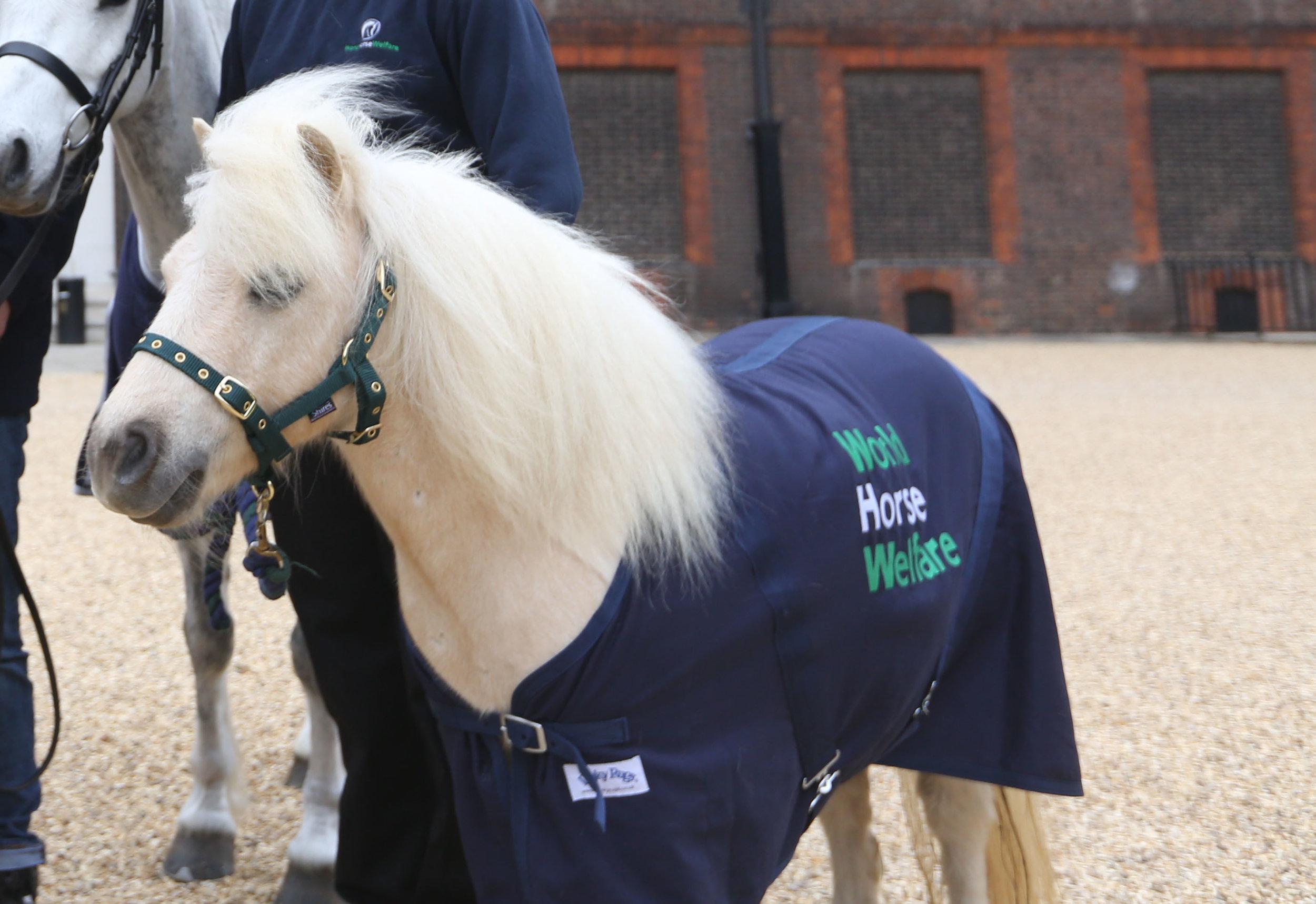 World horse Welfare Pamela is preparing for her Burghley debut!