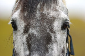 Horses have the largest eyes of any land mammal