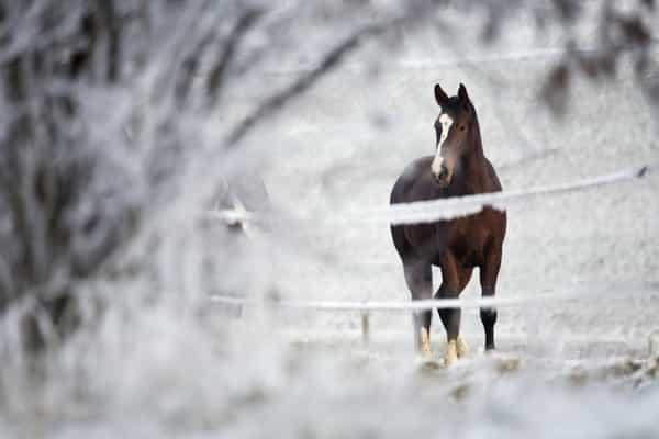 horse-in-field-in-winter