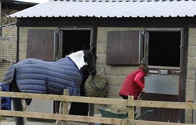 horse+outside+stable.jpeg