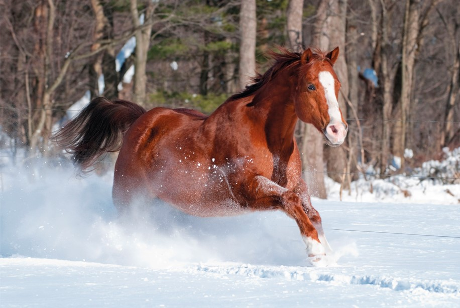 Christmas Horse Pictures.Christmas Cards That Help Horses Your Horse Magazine