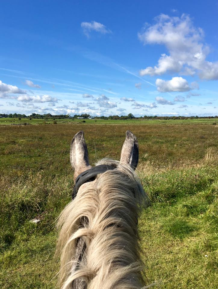 """Didn't get to log my hacking yet but we went for our first real hack from home today me and the little youngster would be about 3 1/2 miles in total bit much compared to others but a huge step for a baby horse on her own!"""