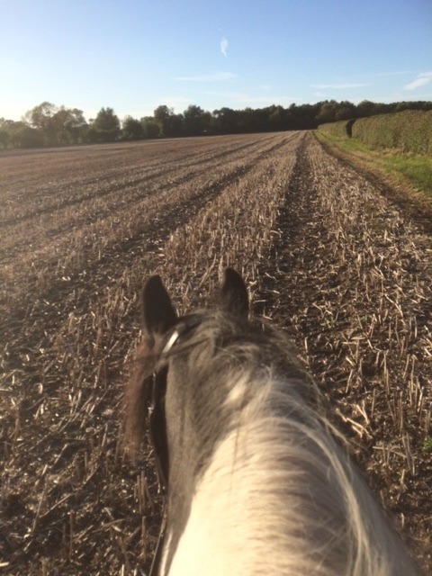 Making the most of the stubble with the Diva