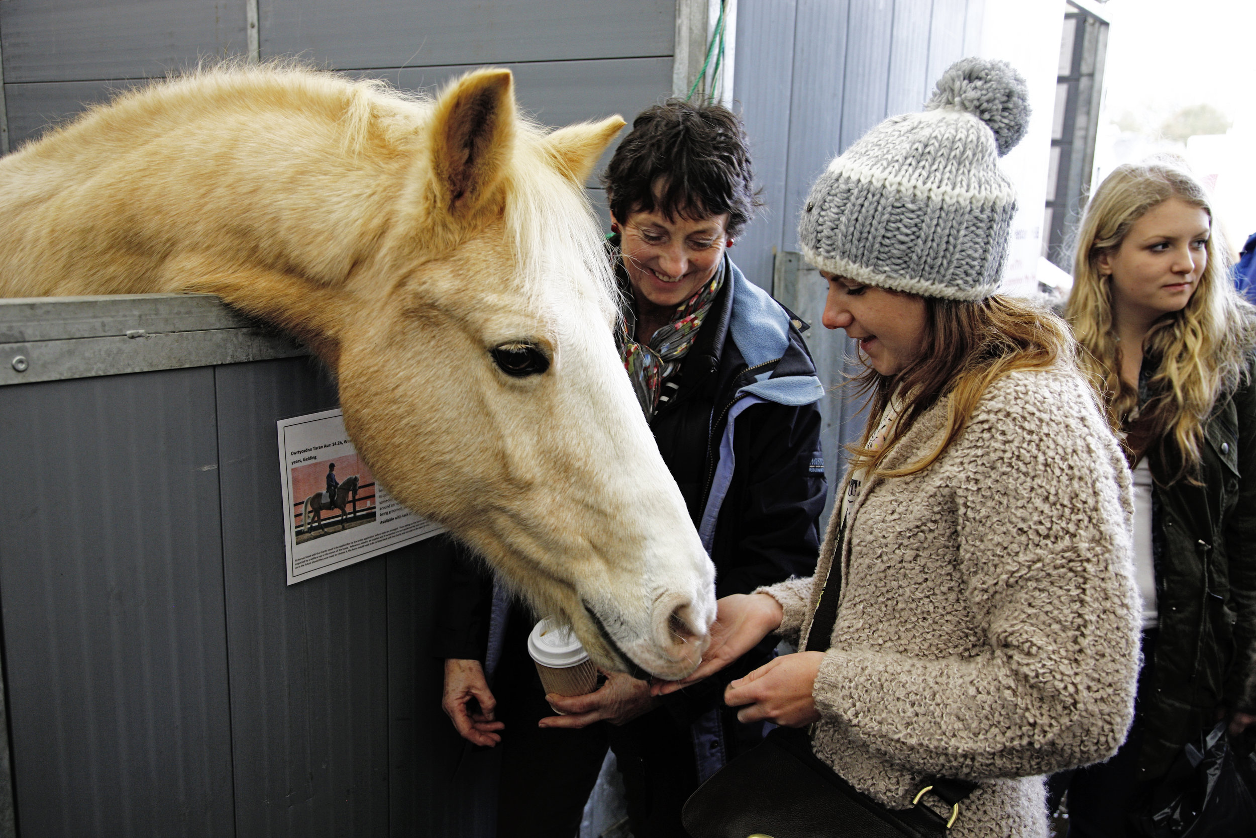 Take a wander through our Rescue Village to see the horses in need of forever homes