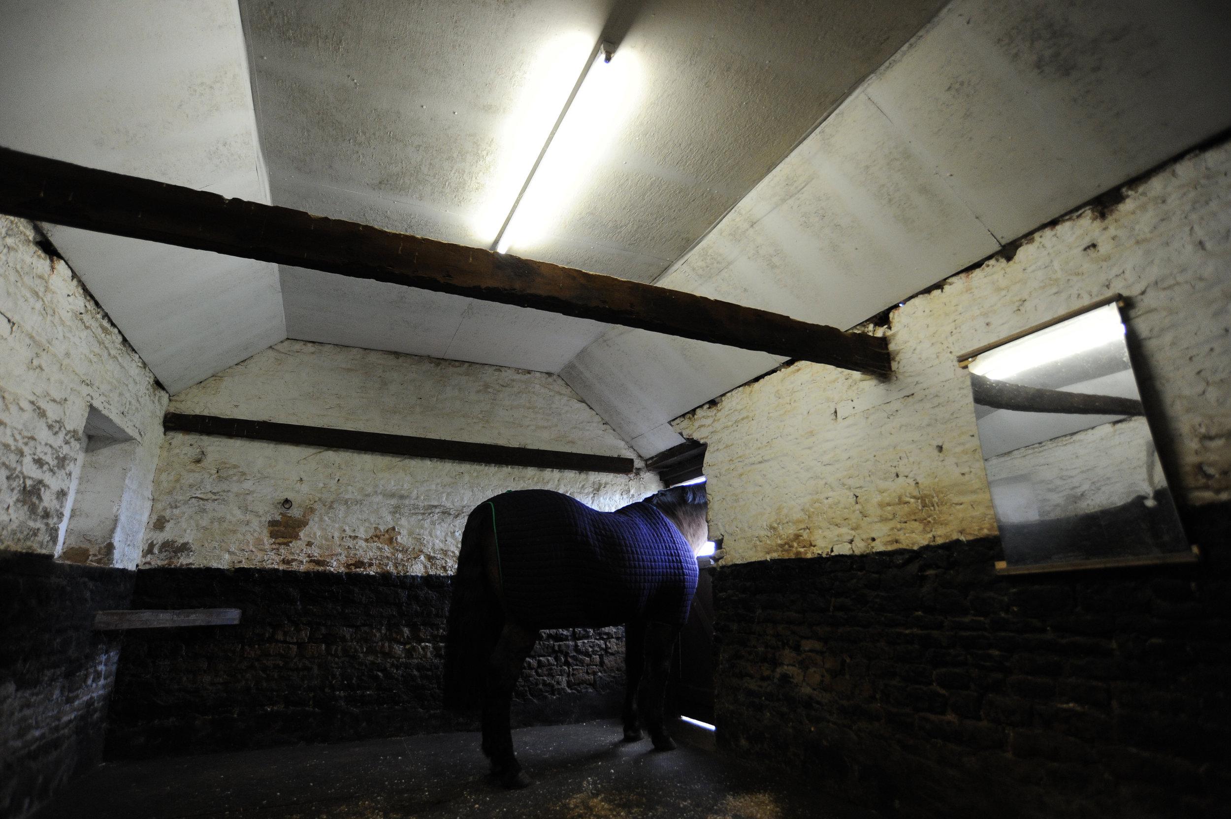 in stable.jpg