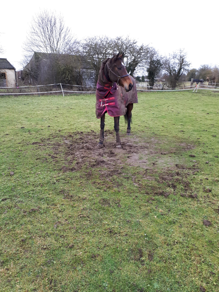 Mud-roll complete, Socks can now get on with her day…