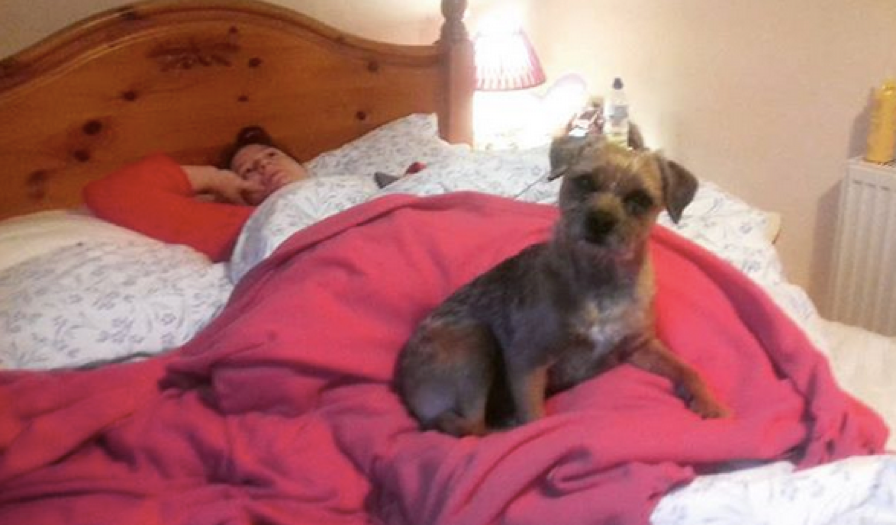 Rosie making sure I don't overdo it by pinning me to my bed!