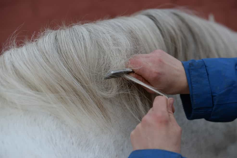 Tidy his mane before you start