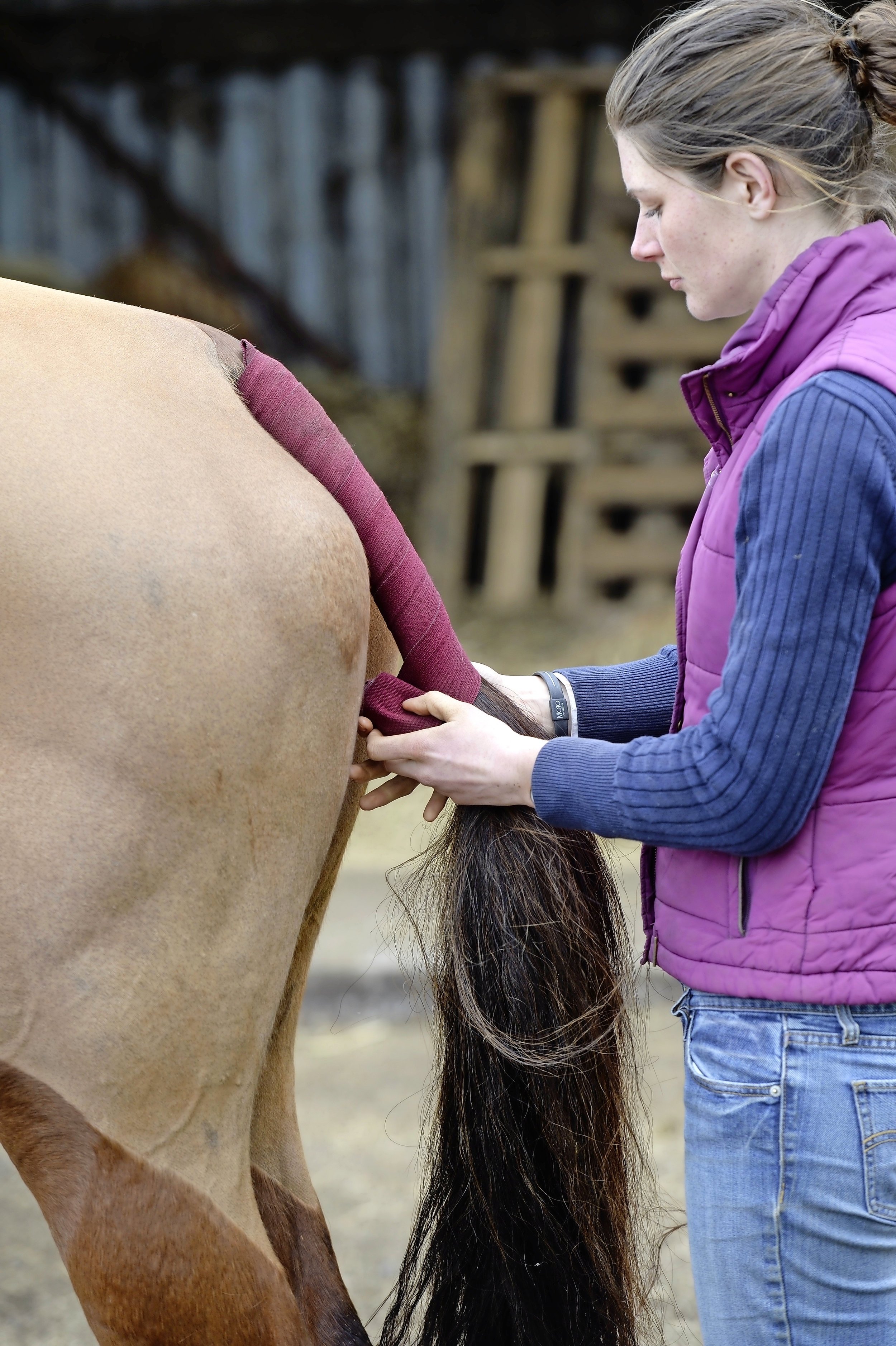 Start from the top and work your way down to the bottom of your horse's dock