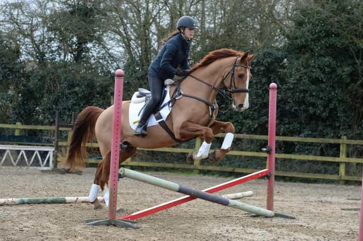 horse-jumping-1.jpg