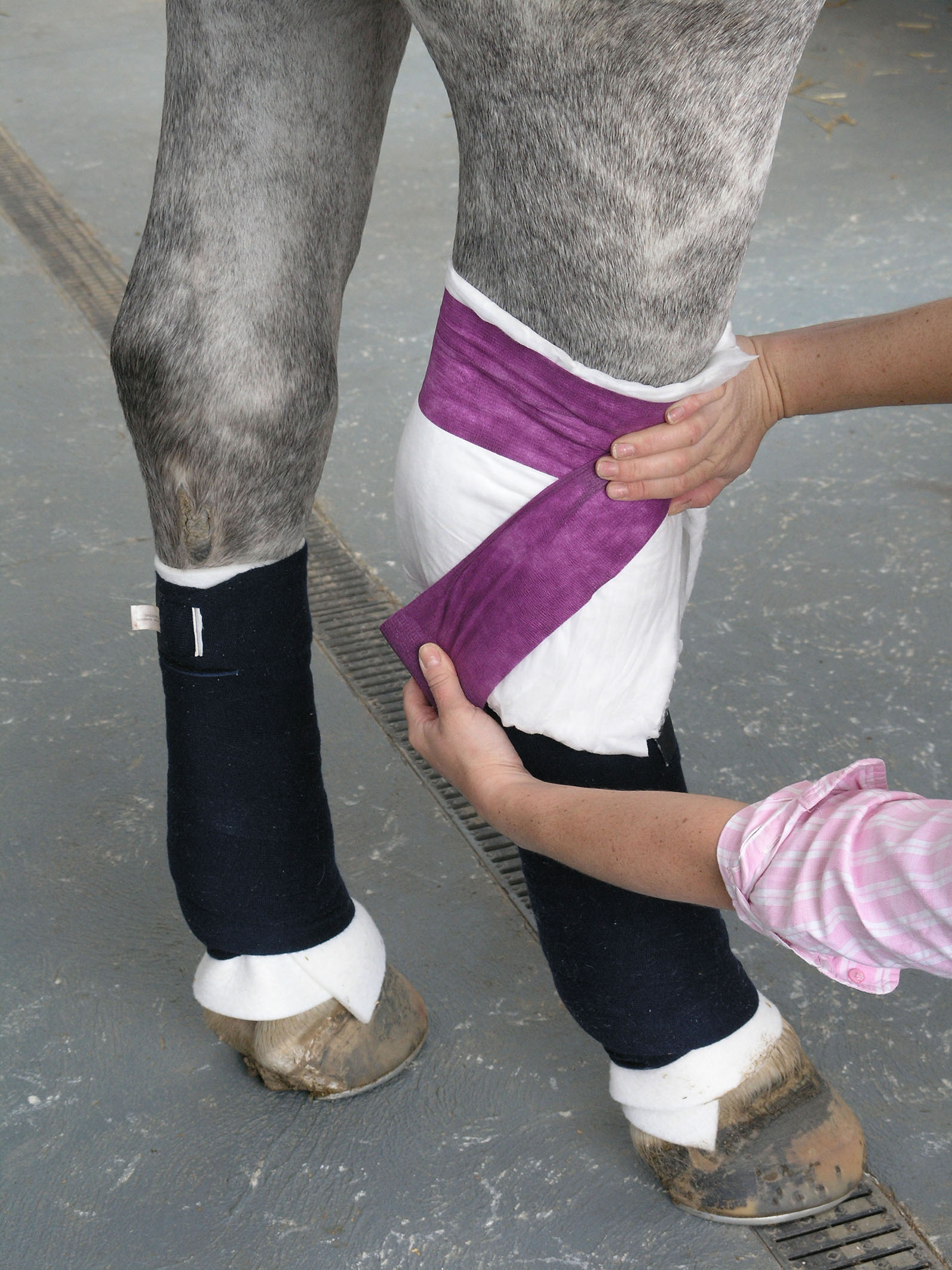 Always bandage both hind legs to provide support before bandaging either the knee or the hock