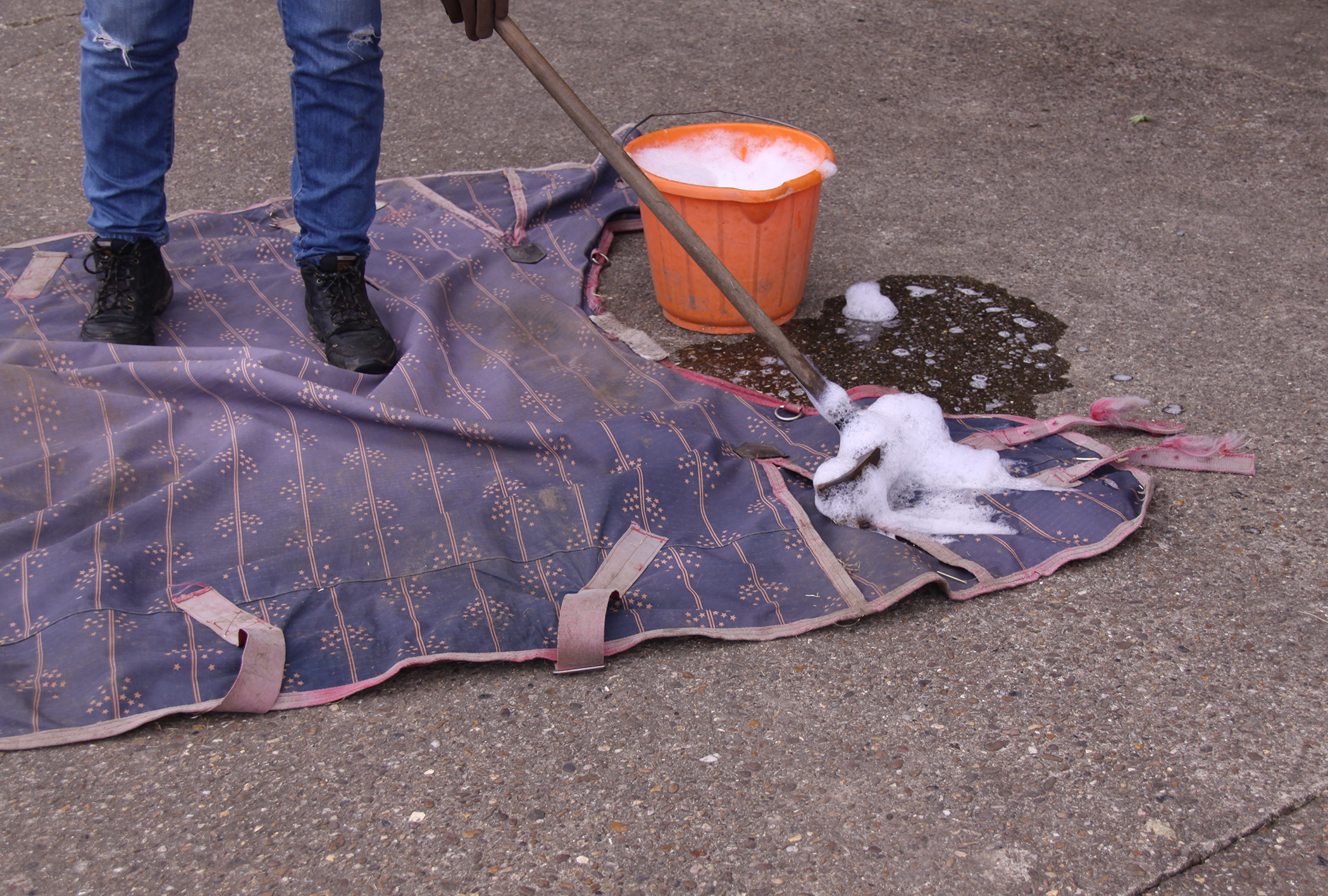 Make sure all rugs are washed and clean