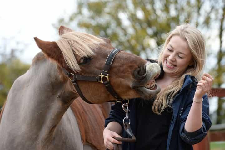 horse-being-cute-1.jpg
