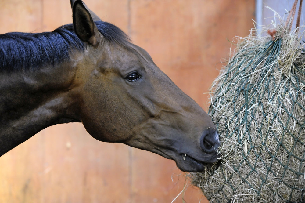 What to feed horses with loose droppings Your Horse Magazine