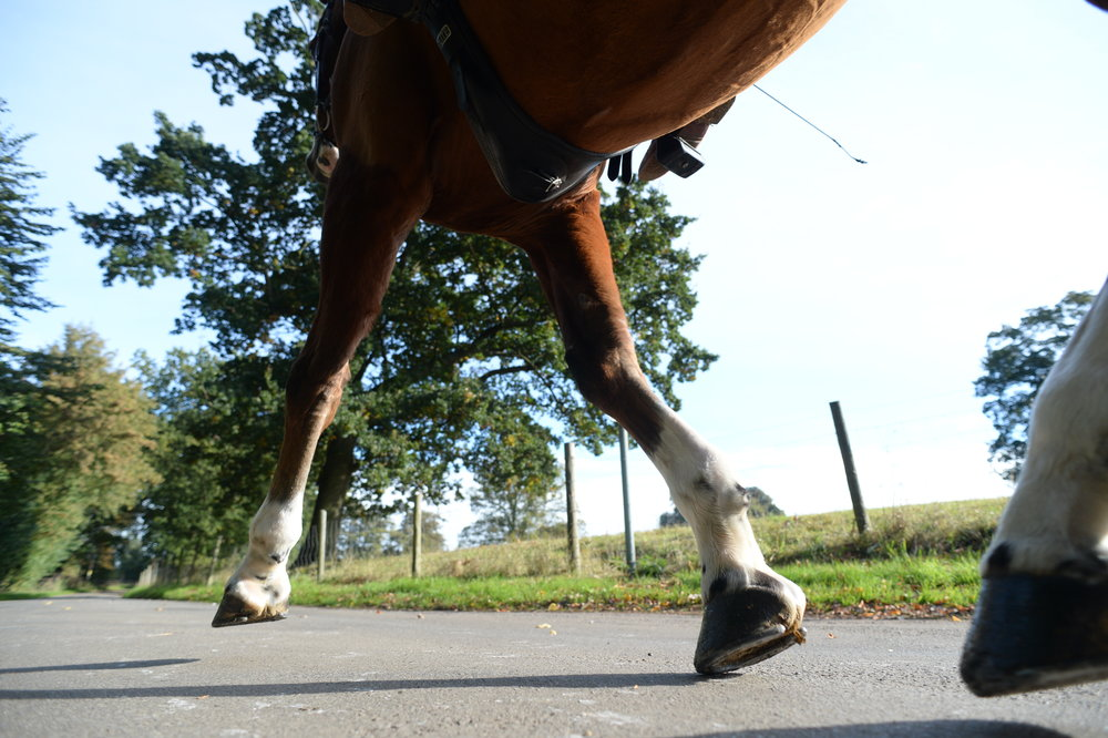 What supplements does a performance horse need? Your Horse