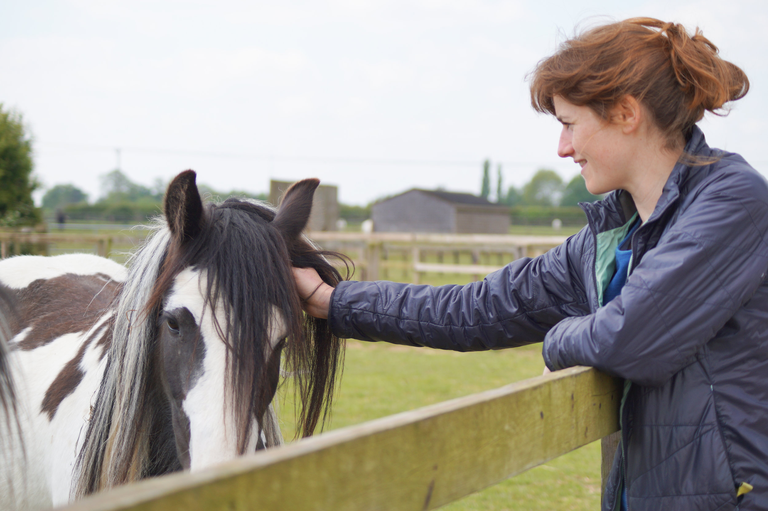 The open day will give the public the chance to meet some of the rescued horses