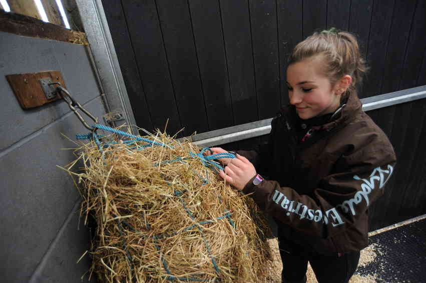 Provide your horse with plenty of forage