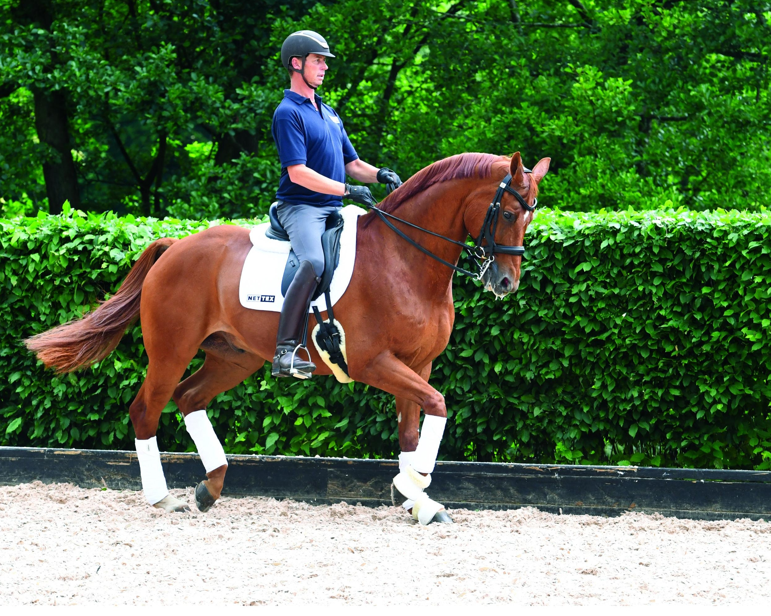The Nettex Joint Care Range is the choice of top riders, such as Olympic gold medallist, Carl Hester.