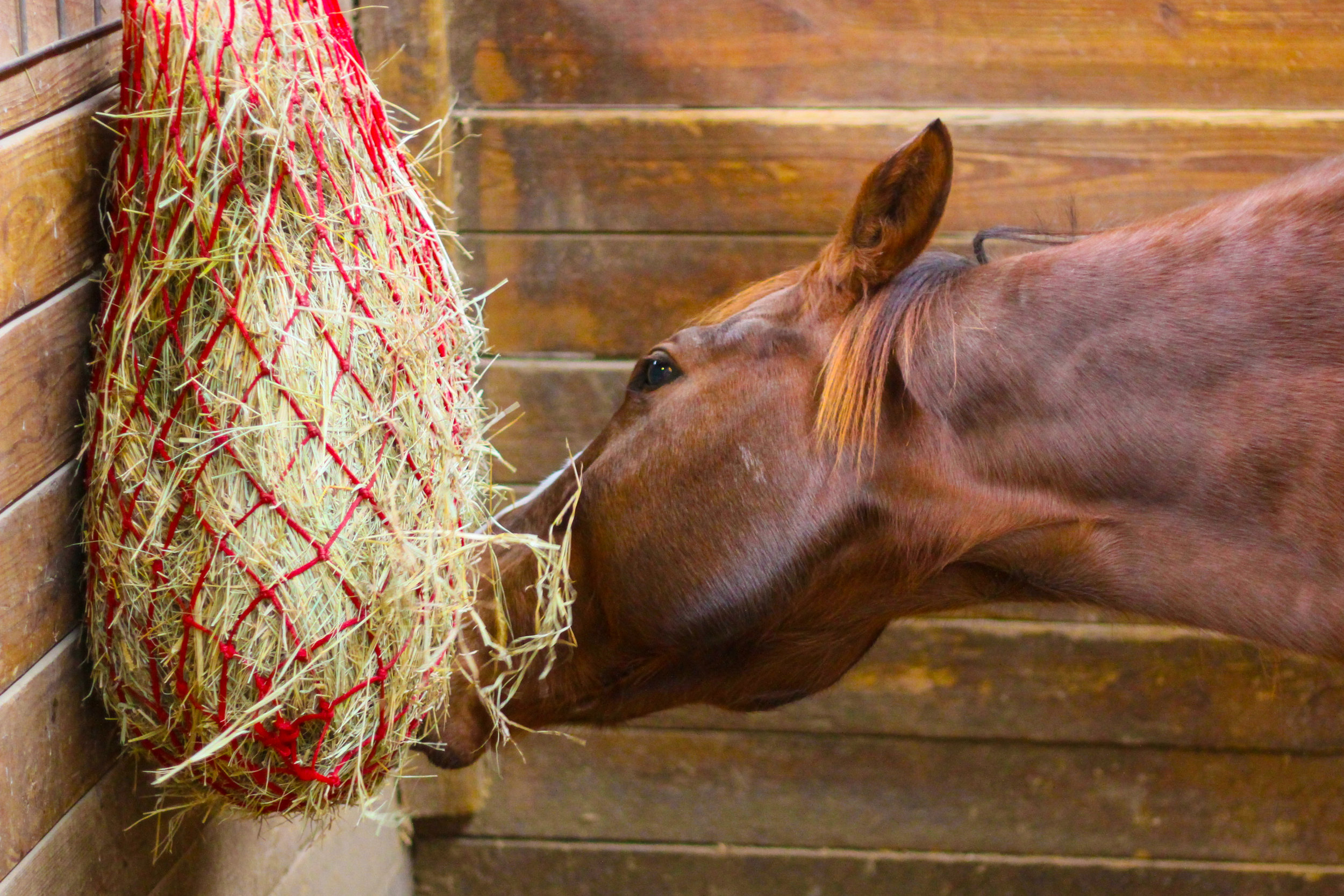 Sometimes your hay has more sugar than you might think