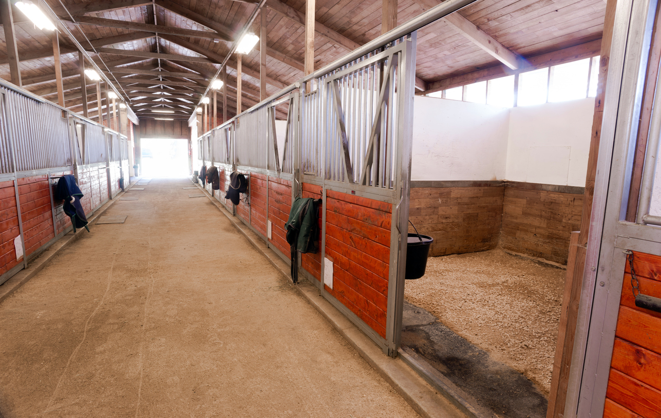 Keeping your yard as clean as possible will help to keep you and your horse healthy and happy